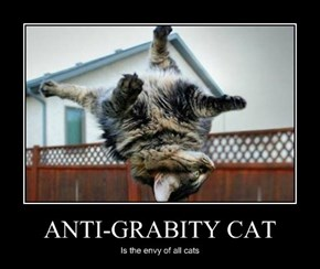 ANTI-GRABITY CAT