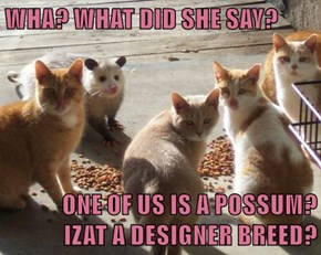 WHA? WHAT DID SHE SAY?  ONE OF US IS A POSSUM?            IZAT A DESIGNER BREED?