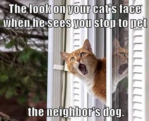 The look on your cat's face when he sees you stop to pet   the neighbor's dog.
