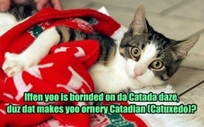 Iffen yoo is bornded on da Catada daze,  duz dat makes yoo ornery Catadian (Catuxedo)?