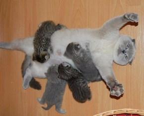 Yay....Motherhood