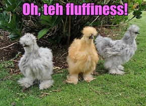 Oh, teh fluffiness!