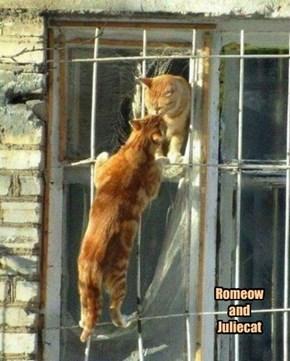 Romeow & Juliecat