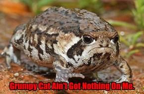Grumpy Frog Got a 'Tude!