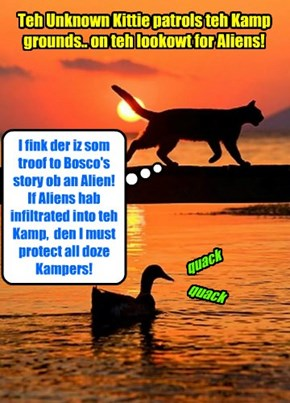 KAMP 2015: From teh bery first, when Bosco claimed to hab hiz moobie ticket stolen by an Alien kittie, most Kampers did not gib dat story much credense.. But teh Unknown Kittie sensed deep in hims soul dat somfing wer amiss!