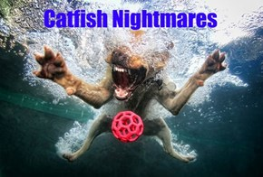 Catfish Nightmares