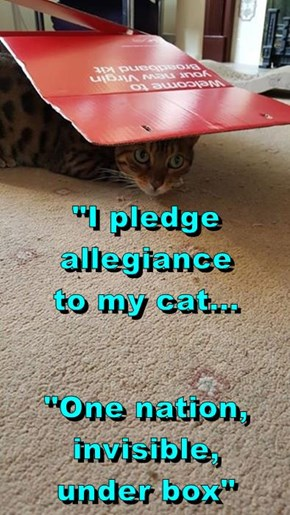 """I pledge allegiance             to my cat... ""One nation, invisible,                 under box"""