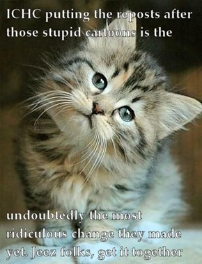 Even cats think this is dumb