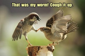 That  was  my  worm!  Cough  it  up.