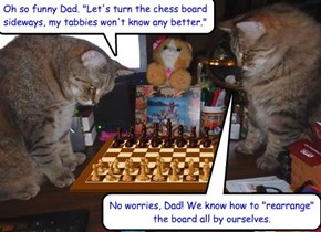 Chess master tabbies
