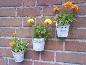 """ToolBee's """"Front Garden""""  :D"""