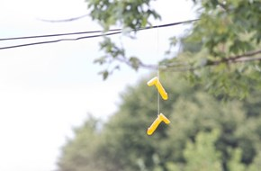 Decorations of the Day: Wild Dildos Appear All Over Portland Power Lines