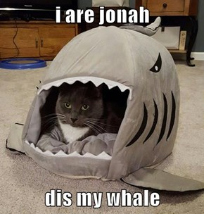 i are jonah  dis my whale
