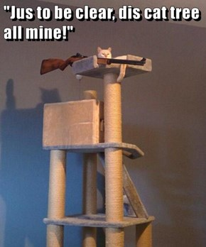 """""""Jus to be clear, dis cat tree all mine!"""""""