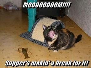 MOOOOOOOOM!!!!  Supper's makin' a break for it!