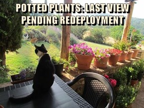 POTTED PLANTS: LAST VIEW PENDING REDEPLOYMENT