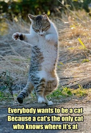 Everybody wants to be a cat Because a cat's the only cat who knows where it's at