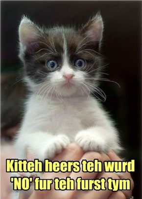 Kitteh heers teh wurd 'NO' fur teh furst tym