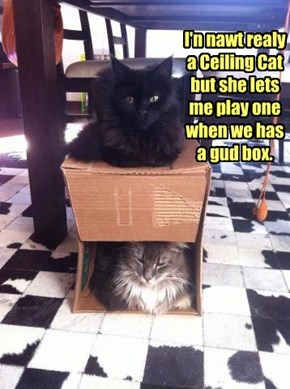 I'n nawt realy a Ceiling Cat but she lets me play one when we has a gud box.