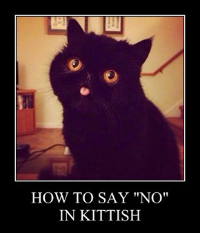"""HOW TO SAY """"NO"""" IN KITTISH"""