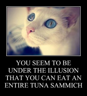 YOU SEEM TO BE UNDER THE ILLUSION THAT YOU CAN EAT AN ENTIRE TUNA SAMMICH