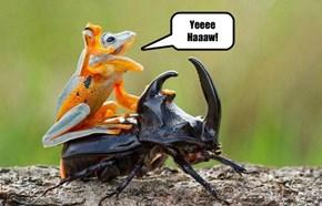 Yeeee Haaaw!