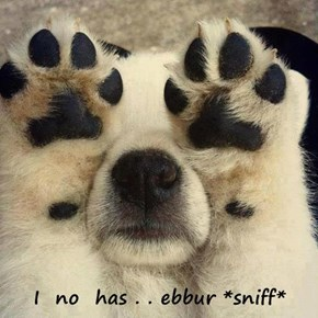I  no  has . . ebbur *sniff*