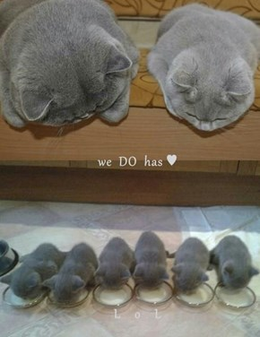 we  DO  has ♥     L    o    L