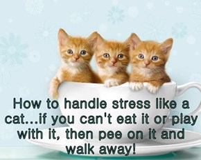 How to handle stress like a cat...if you can't eat it or play with it, then pee on it and walk away!