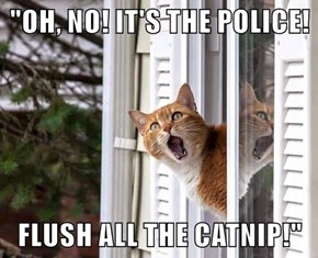"""""""OH, NO! IT'S THE POLICE!  FLUSH ALL THE CATNIP!"""""""