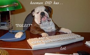 hooman  DID  has . .               *DULEET*                                     LoL