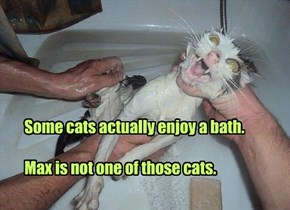 Some cats actually enjoy a bath.  Max is not one of those cats.