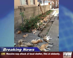 Breaking News - Massive nap attack at local shelter, film at elebenty.