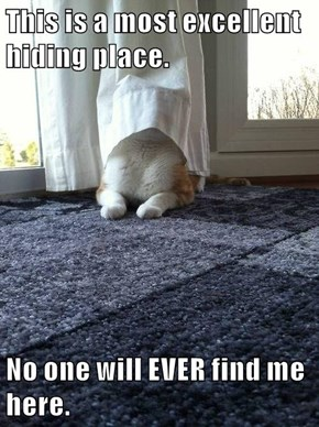 This is a most excellent hiding place.  No one will EVER find me here.