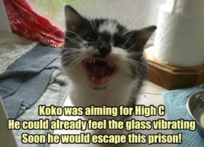 Koko's Kunning Plan