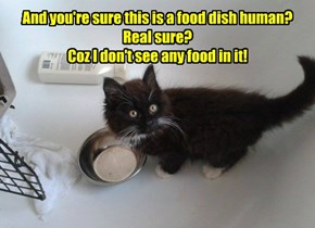 And you're sure this is a food dish human? Real sure? Coz I don't see any food in it!