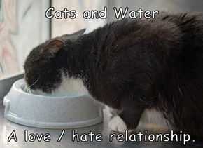 Cats and Water  A love / hate relationship.