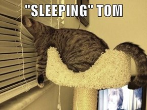 """SLEEPING"" TOM"