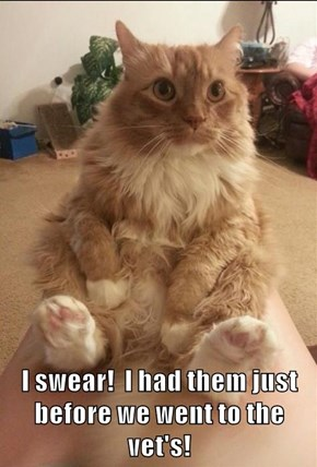 I swear!  I had them just before we went to the vet's!