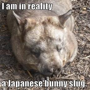 I am in reality  a Japanese bunny slug.