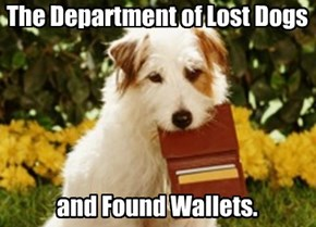 The Department of Lost Dogs      and Found Wallets.