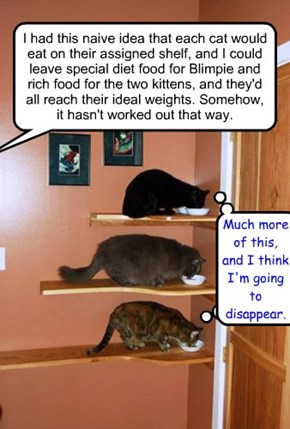 Kitty diet woes