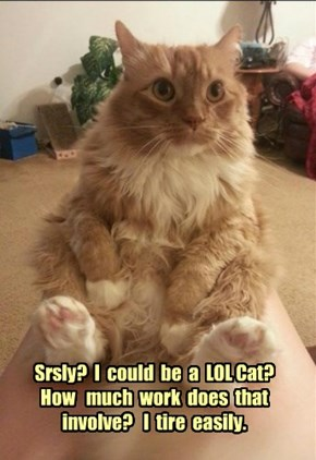 Srsly?  I  could  be  a  LOL Cat?   How   much  work  does  that  involve?   I  tire  easily.
