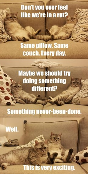 Couch Cats Conversations