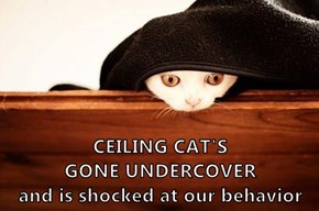 CEILING CAT'S                          GONE UNDERCOVER                     and is shocked at our behavior