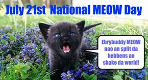 National MEOW Day!