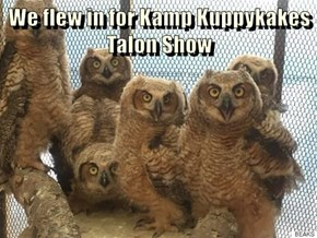 We flew in for Kamp Kuppykakes Talon Show