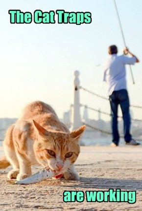 The Cat Traps