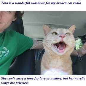 Tara is a wonderful substitute for my broken car radio  She can't carry a tune for love or nommy, but her novelty songs are priceless