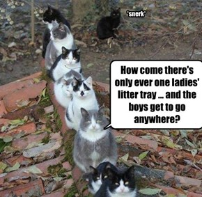 How come there's only ever one ladies' litter tray ... and the boys get to go anywhere?